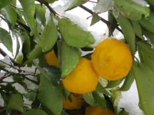 柚子胡椒の美容効果とは?